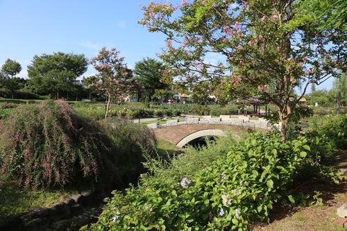咲いてます!川西ダリヤ園・・・63_c0075701_7224345.jpg