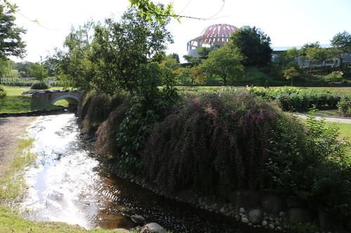 咲いてます!川西ダリヤ園・・・63_c0075701_724399.jpg