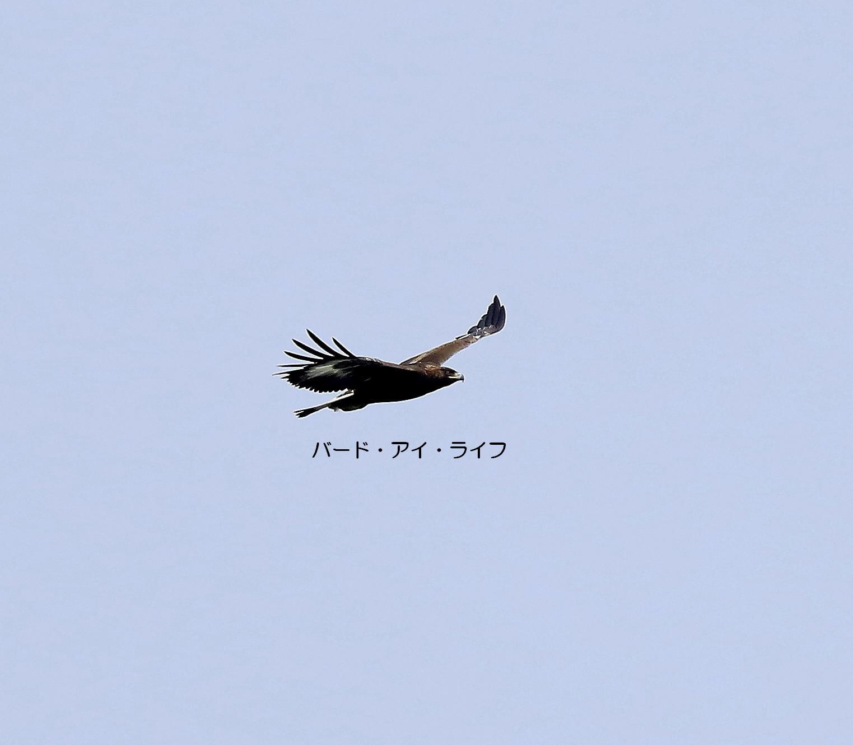 c0319902_17495175.jpg