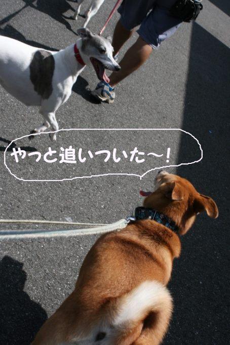 空海くんのお散歩_f0242002_2121664.jpg