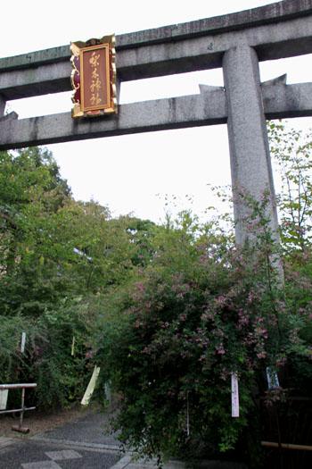 梨の木神社 萩_e0048413_17252163.jpg