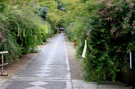 梨の木神社 萩_e0048413_17253240.jpg