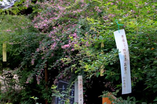 梨の木神社 萩_e0048413_17254354.jpg