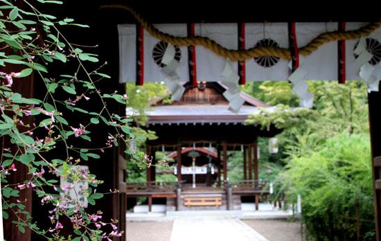 梨の木神社 萩_e0048413_17255314.jpg