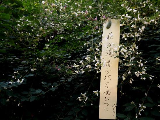 梨の木神社 萩_e0048413_17271126.jpg