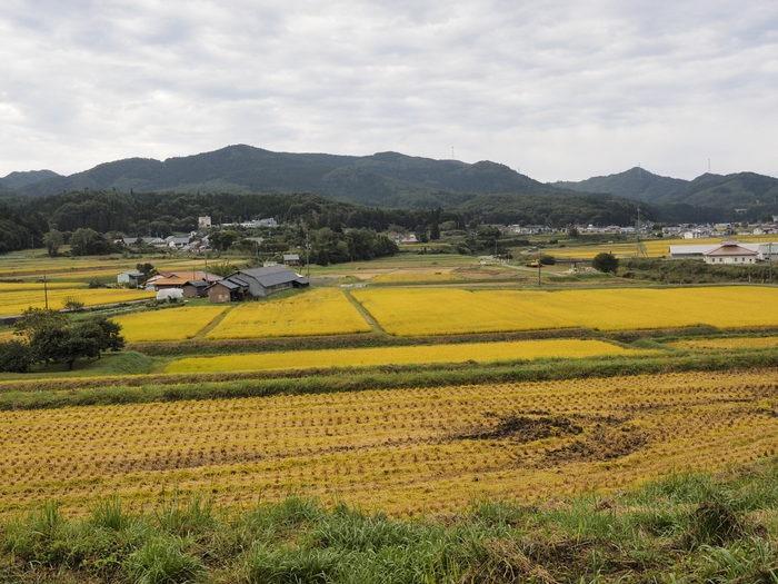 吉和の田んぼ風景_c0116915_0511031.jpg