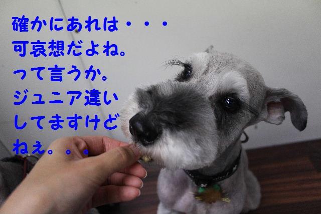 b0130018_10522060.jpg