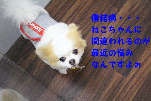 b0130018_1121914.jpg