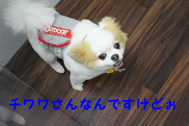 b0130018_1122736.jpg