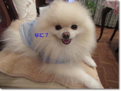 b0167519_1775997.jpg