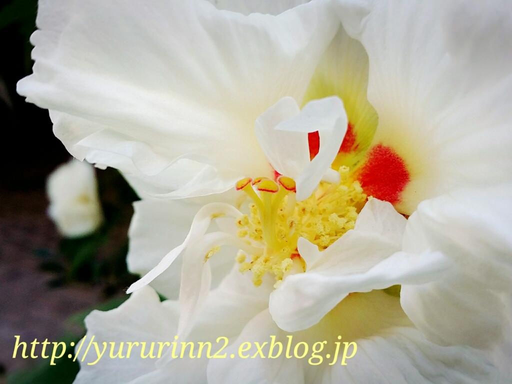 b0300819_10013975.jpg