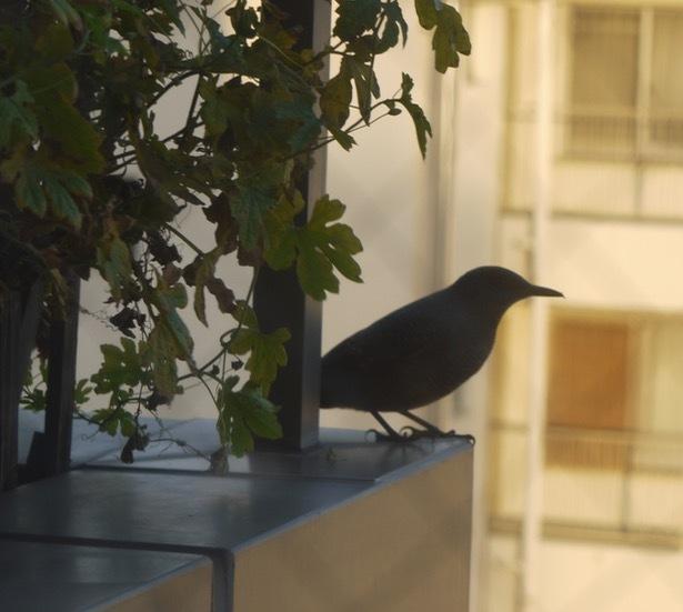 鳥さんの訪問_e0356356_10000770.jpg