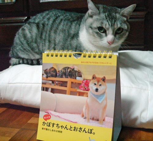 かぼちゃん日めくりカレンダー♪_e0001558_10445865.jpg