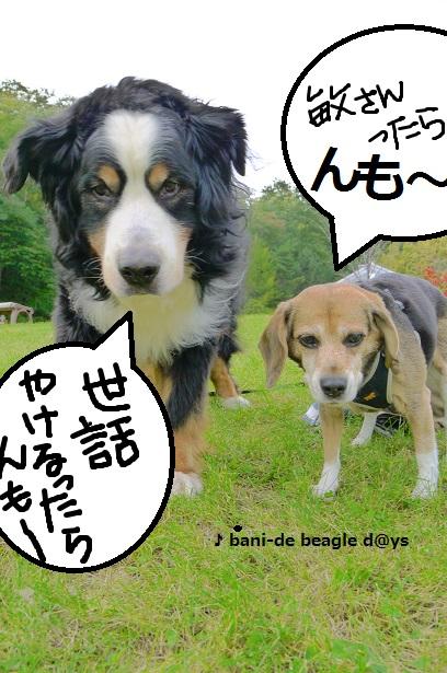 f0150377_20121535.jpg