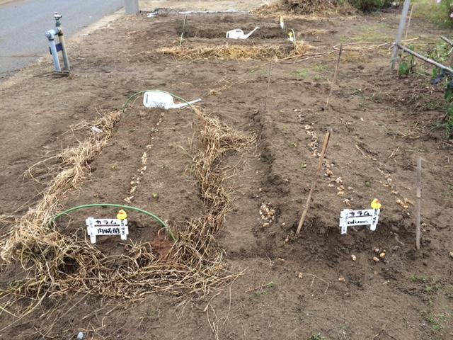 農作物へ取り組みスタート_f0170778_10382957.jpg