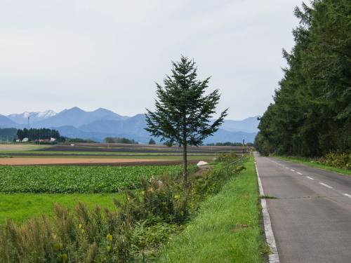 10月秋めいてきた農村風景とハロフィンの「紫竹ガーデン」_f0276498_15580251.jpg