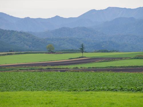 10月秋めいてきた農村風景とハロフィンの「紫竹ガーデン」_f0276498_15583031.jpg