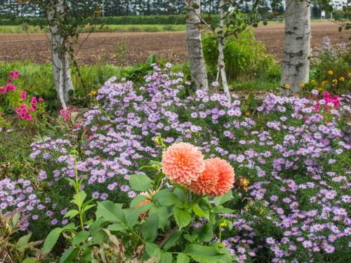 10月秋めいてきた農村風景とハロフィンの「紫竹ガーデン」_f0276498_16003246.jpg