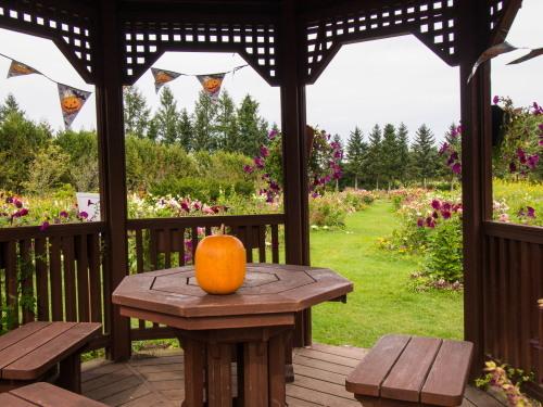 10月秋めいてきた農村風景とハロフィンの「紫竹ガーデン」_f0276498_16011547.jpg