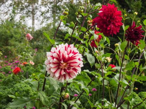 10月秋めいてきた農村風景とハロフィンの「紫竹ガーデン」_f0276498_16032521.jpg