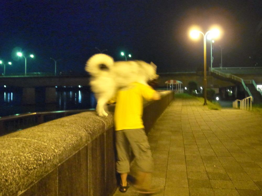 ある日のおんぶ犬 (≧∇≦)_c0049299_22434381.jpg