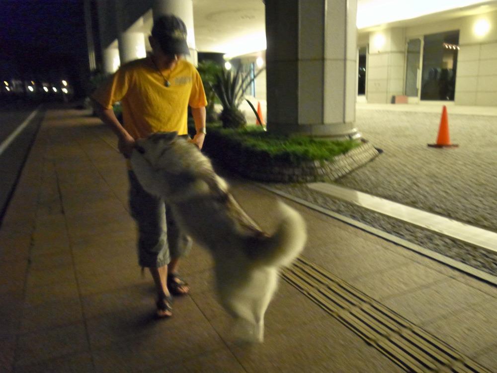 ある日のおんぶ犬 (≧∇≦)_c0049299_22453718.jpg