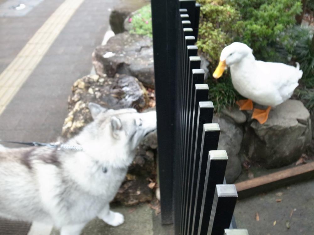 ある日のおんぶ犬 (≧∇≦)_c0049299_22531719.jpg