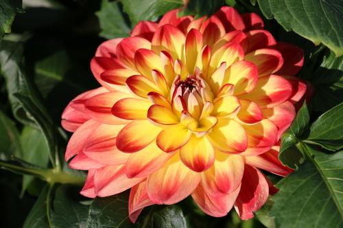 咲いてます!川西ダリヤ園・・・64_c0075701_6104789.jpg
