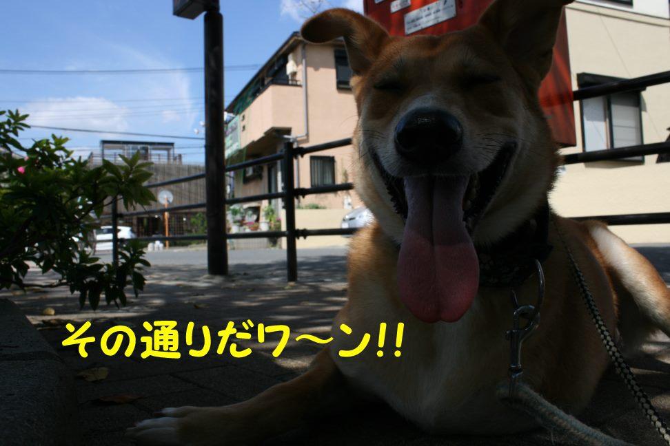 空海くんのお散歩_f0242002_224262.jpg