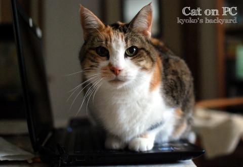 猫がPCに乗る季節のはじまり_b0253205_02362390.jpg
