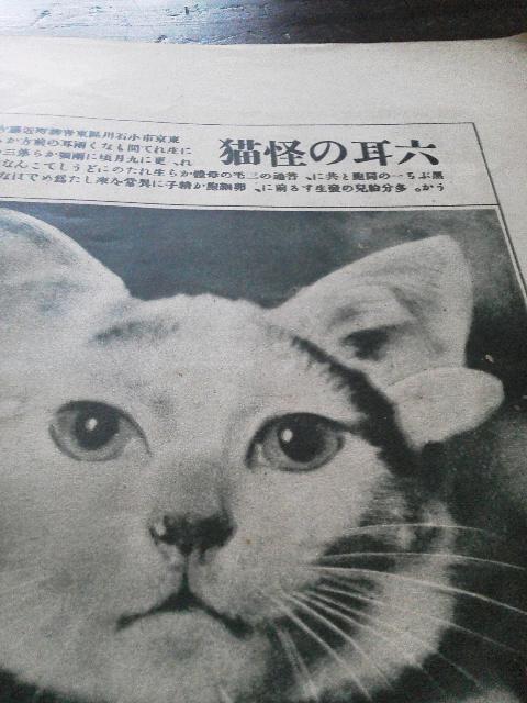 10月のお休み予定 + 六耳の怪猫_e0350308_746549.jpg