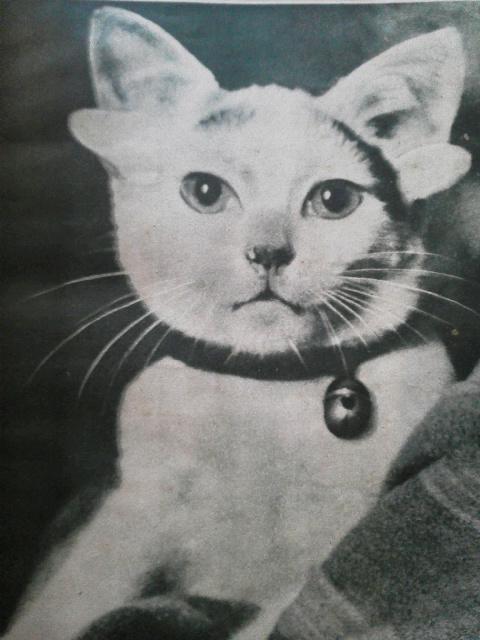 10月のお休み予定 + 六耳の怪猫_e0350308_746584.jpg