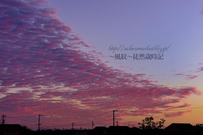 嵐のあとのうろこ雲。_f0235723_201388.jpg