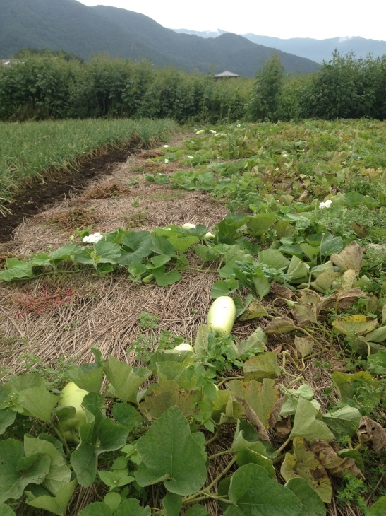 収穫祭_d0161933_22140818.jpg