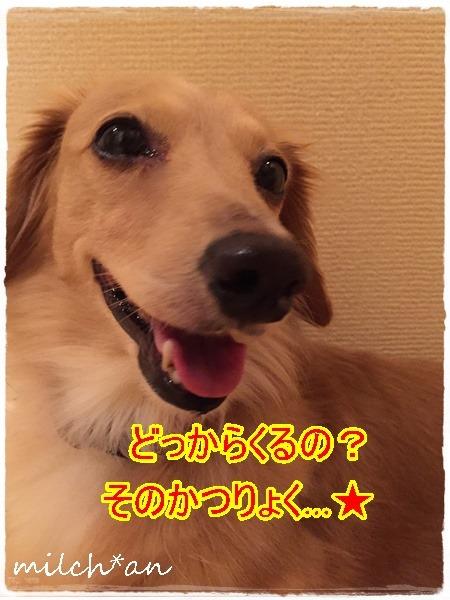 b0115642_2221511.jpg