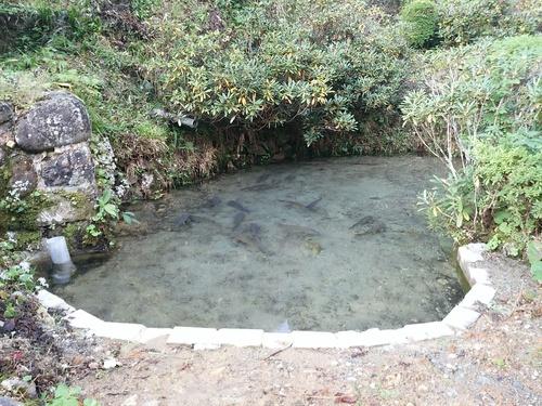 池修復_e0161791_14344465.jpg
