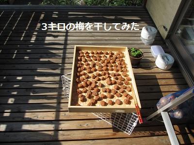 2015梅干し作り_f0068501_2312971.jpg