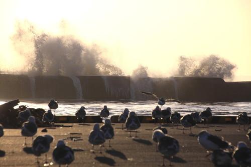 爆弾低気圧で大シケ波しぶき 10月3日_f0113639_1646614.jpg