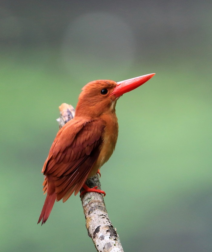 第4回アドベントカレンダー(20日目)「自然にある一瞬を切り取った写真」_f0228071_11571520.jpg