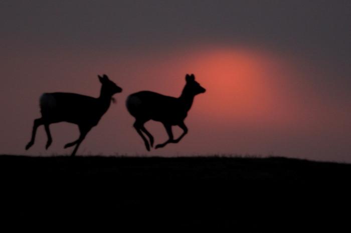 第4回アドベントカレンダー(20日目)「自然にある一瞬を切り取った写真」_f0228071_1213087.jpg