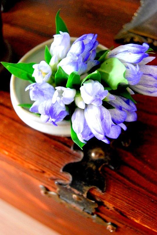 明日香村の秋 りんどうの花 苔の花_b0165872_22162369.jpg