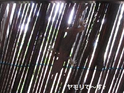 f0068501_21522124.jpg
