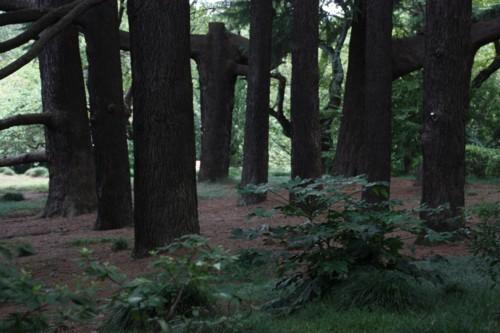 大木の生存空間は森閑として_f0055131_16173563.jpg