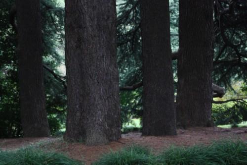 大木の生存空間は森閑として_f0055131_16174742.jpg