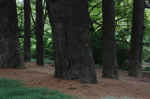 大木の生存空間は森閑として_f0055131_1617556.jpg