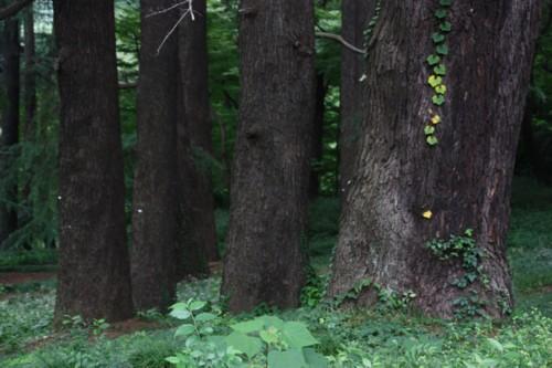 大木の生存空間は森閑として_f0055131_16181620.jpg