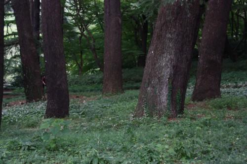 大木の生存空間は森閑として_f0055131_16183292.jpg