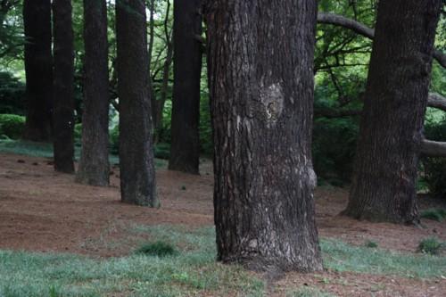 大木の生存空間は森閑として_f0055131_1618417.jpg