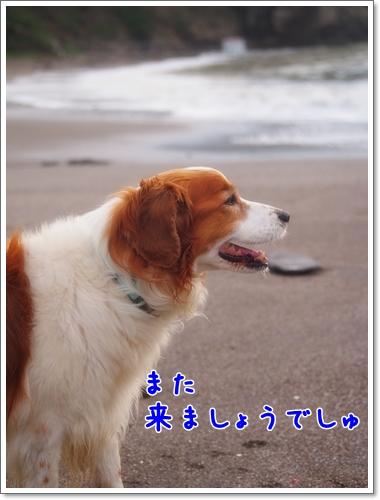 d0013149_0293755.jpg