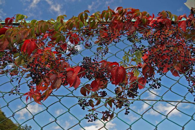 紅葉を探して_d0162994_8203693.jpg